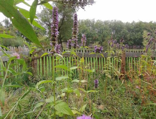 Bee-garden: Plantasia